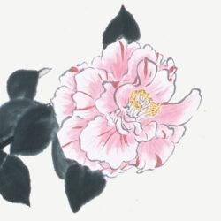 Horiuchi Etsuko_1_Camellia japonica _Hikarugenji_