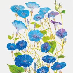 Kato Yuji_1_17 Morning Glory_Color (Creation and Harmony)