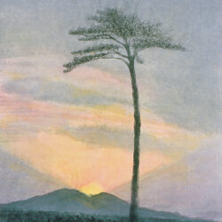 Lone Pine of Hope (Praying for Revival)