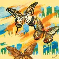 A Man Who Keeps Butterflies