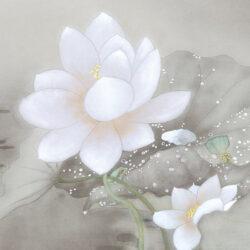 Noriko _1_Lotus Flowers Glisten in the Morning Dew